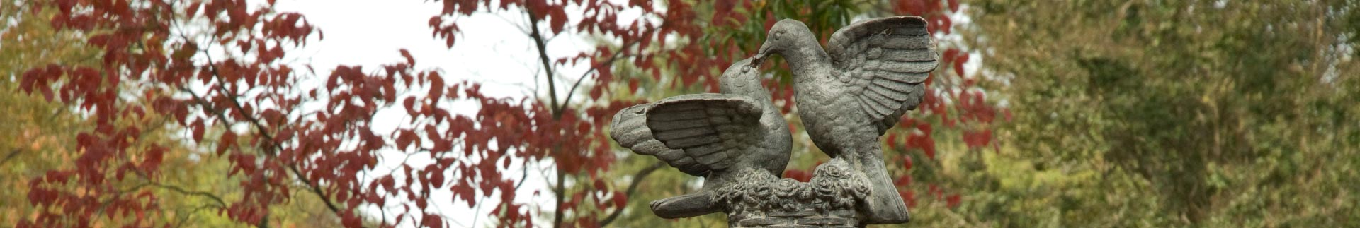 RCCD-Doves-Fall-Trees-in-Background
